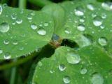 rain - rain drops