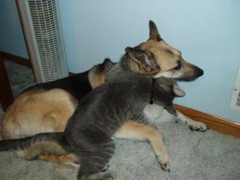 My cat is giving my dog a big hug - My cat and my dog a big hug
