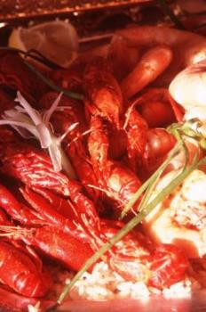 Shrimp and Crawdads--My normal view - This photo depicts my normal view of shrimp and crawdads....I had never seen shrimp alive and in a tank before visiting your website...