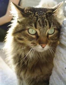 Cat - A close up of a cat.