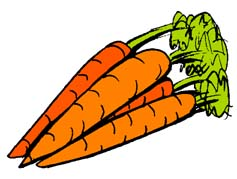 Carrots - A picture of carrots.
