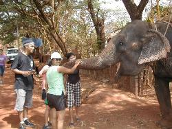 Me and an elephant - Im in green.