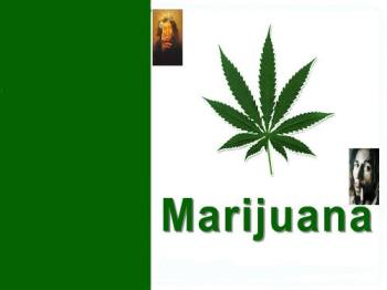 marijuana  - The whole cannabis plant, including buds, leaves, seeds, and root, have all been utilized throughout the long history of this controversial herb. Despite persistent legal restrictions and severe criminal penalties for illicit use, marijuana continues to be widely used in the United States, and throughout the world, both for its mood-altering properties and its proven medicinal applications.