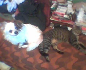 dog&cat - hello