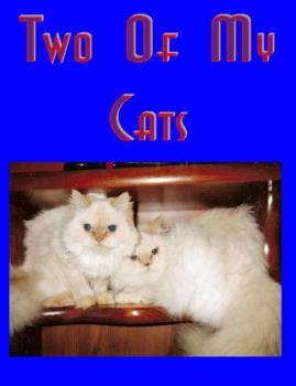 Two Of My Himalayans - Two white cats. Joe and Pooh Bear