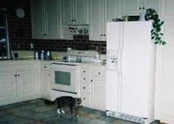 Kitchen - A beautiful kitchen with appliances.