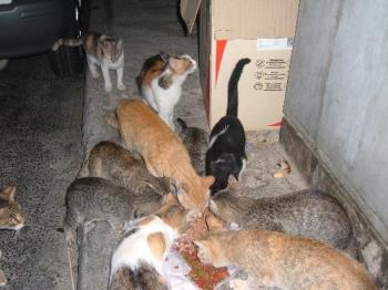 Stray Cats - We must be kind towards stray animals.