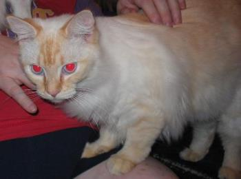 """E.B. with bad """"red eye"""" - This was taken not too long after we got her, she filled out more later."""