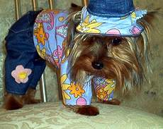 Hippy Dog - A hippy outfit for Gissi