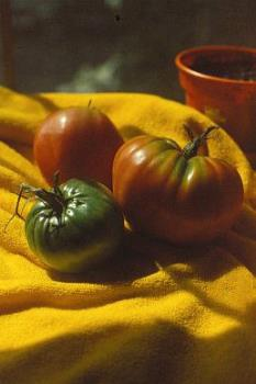 My own home grown tomatoes - photo of tomatoes