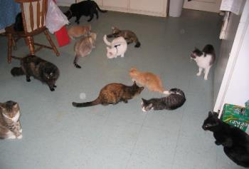 "some of my cats - a ""catnip"" moment"