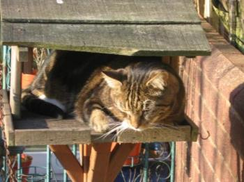 Moomin - Lurking on the bird table, lying in wait
