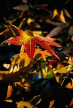 Close up of a fall colored leaf - fall leaves