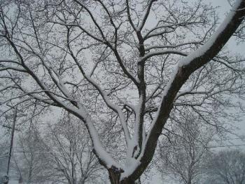 snow - snow on a tree
