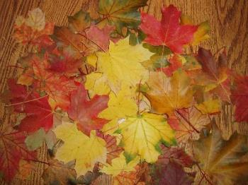 big colorful leaves - a pile of all leaves