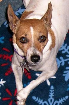 My Jack Russell - She is one of the loves in my life.
