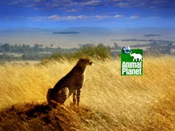 Animal Planet - Animal Planet reflects mankind's eternal fascination with the creatures that share our world.