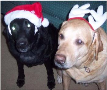 Santa Dog and Christmoose - This is Denny (the black one) and his son , Robbie. Robbie was born with a heart defect and we were told he would not live to be more then a year old...surprise..he will be 9 in December