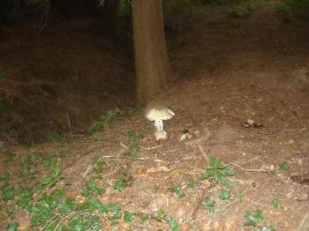 Toadstool - A toadstool in the woods in Bolney.