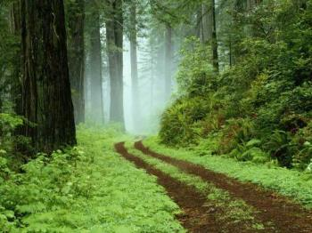 Forest - A wild forest path