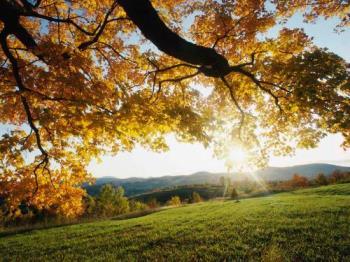 Autumn - Autumn leaves
