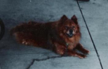 my puppy-love - Animal Munchkin 5-16-95 ~ 12-18-05 Mama's boy