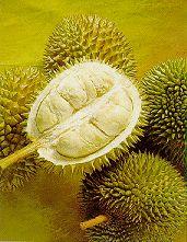 Durian - king of fruits - Durian - king of frutis