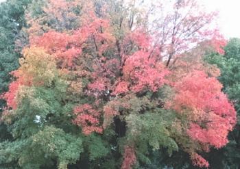 Beauty of fall - Great hues I feel