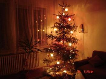 christmas tree - our christams tree with decorations