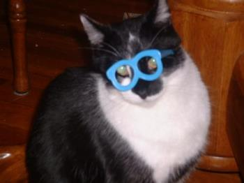 Thomas wearing his party glasses - Here's Thomas Kitty with his party glasses on. he's ready. :)