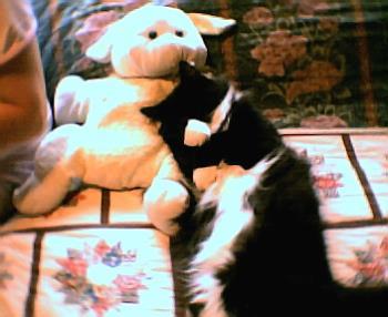 Gizmo - our late kitty gizmo