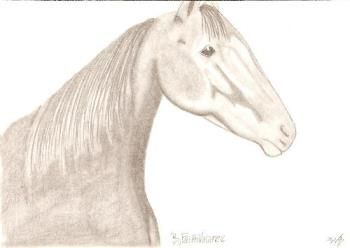 Drawing of a horse my hubbys caretaker too. ByFait - Something I like to do in my spare time. This is a drawing of a horse that my hubby cares for, shes a pacing filly by the name of ByFaithValaree. Drawn from a photo I took of her one morning during feeing time, she was watching my hubby closely as she was ready to eat!