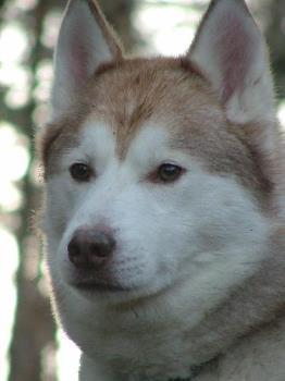 Kai - 9 year old Kai