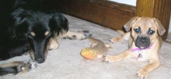 Star, Piston, & Hemi - My pets. They all get along so well.