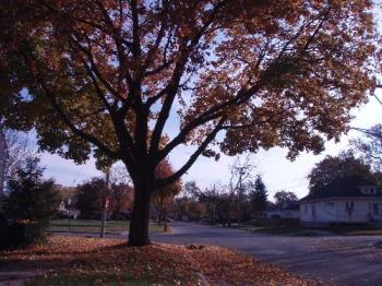 photo's - trees with falling leaves