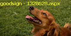 """petdog - dog """"body and voice"""" language can be learned through dog training class.."""