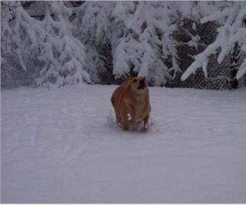 Robbie playing in the snow  - This is Robbie, we adopted him knowing he would die within months. Our love for each other has kept him going for almost 9 years now.