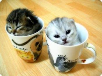 cats - Cute cats