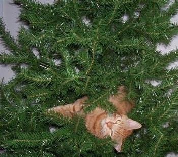 Cat In Christmas Tree - This is a picture of a cat in a Christmas tree.