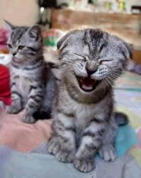 Cute - Cats