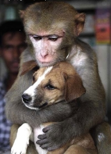 monkey giving doggy a big monkey-hug - monkey giving doggy a big monkey-hug... from me to you