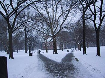 snow - beauty of snow