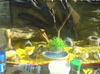 My crabitat - Here is where my hermies live