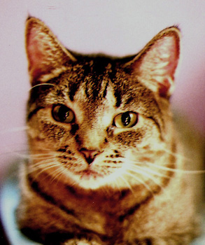 Photo Of My Other Kitty~~Kissy - image of Kissy
