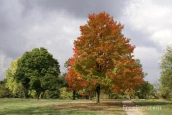 The beautiful trees - This shows the the beautiful trees