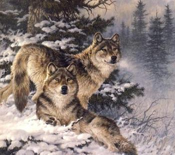 My Wolf Image For Wallpaper/screensaver - image of two wolves in the snow