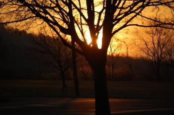 sunset at the park - This was taken with a DSLR, with a 55-200mm Nikon DX lens