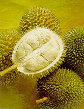 Durian - tropical fruit - Durian