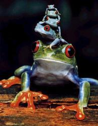 Frog Pile - Frog Pile