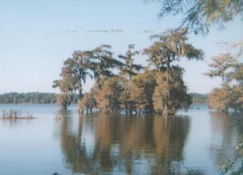 Lake Martin - A scene of Lake Martin in Louisiana